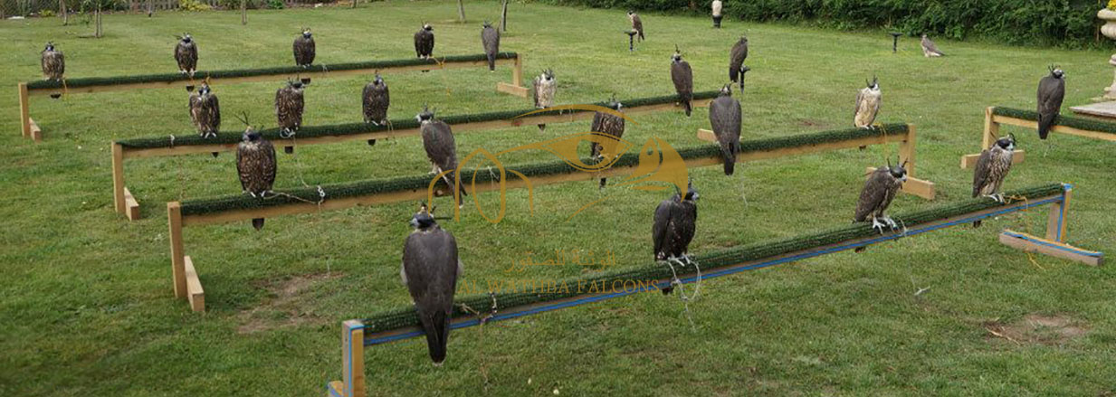 Al-Wathba-Falcons-Breeding-Facility