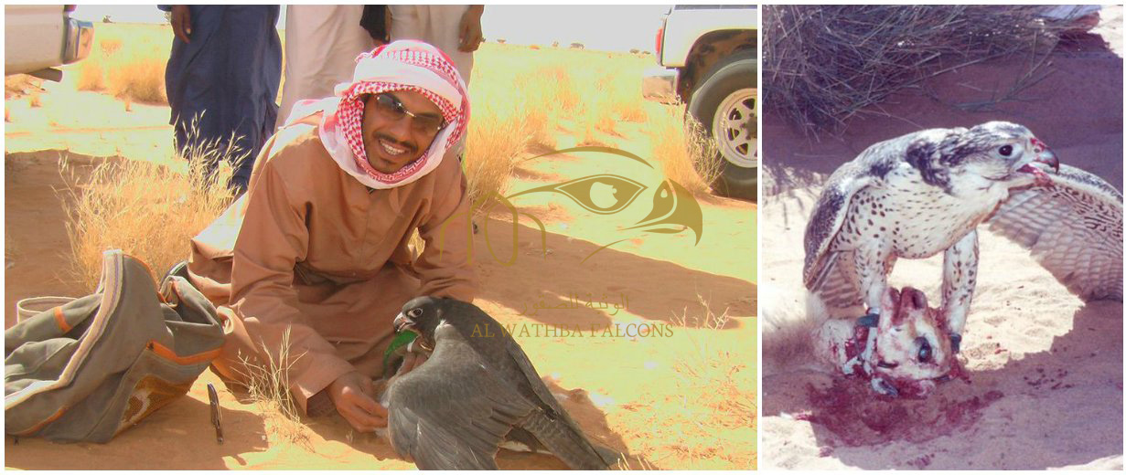 Al-Wathba-Falcons-Slider-3